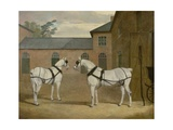 Mr. Sowerby's Grey Carriage Horses in His Coachyard at Putteridge Bury, Hertfordshire, 1836 Giclee Print by John Frederick Herring Snr