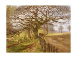 The Tree, 1861 Giclee Print by John Milne Donald