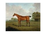 Chestnut Horse in a Landscape, 1815 Giclee Print by John Nott Sartorius