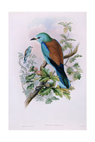European Roller; Coracias Garrula, 1862-1873 (Hand-Finished Colour Lithograph) Giclee Print by John Gould