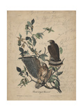 Broad-Winged Buzzard, 1840 Giclee Print by John James Audubon