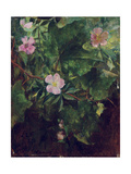 Wild Rose and Grape Vine, Study from Nature, 1871 Giclee Print by John La Farge
