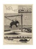 The Belgian African Expedition, Disembarking Elephants at Msasani Bay Giclée-tryk af John Charles Dollman