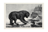 Erebus and Terror Giclee Print by John William Bottomley