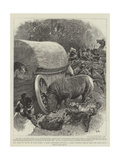 The Perils of Travel in South Africa Giclee Print by John Charlton