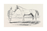 Colonel Peel's Orlando, the Winner of the Derby Giclee Print by John Frederick Herring Snr