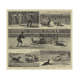 Sheep-Dog Trials at the Alexandra Palace Giclee Print by John Charles Dollman