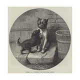 Bothered Giclee Print by John William Bottomley