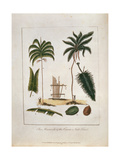 The Manicole and the Cocoa Nut Tree Giclee Print by John Gabriel Stedman