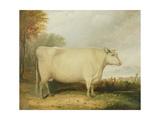 Portrait of a Prize Cow Giclée-Druck von John Vine