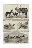 The Earl of Derby's Menagerie, at Knowsley Giclee Print by John Wykeham Archer