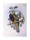 Wompoo Fruit-Dove (Ptilinopus Magnificus) Giclee Print by John Gould