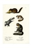 Eastern Chipmunk, 1824 Giclee Print by Karl Joseph Brodtmann