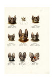 Different Kinds of Bats, 1824 Giclee Print by Karl Joseph Brodtmann