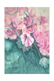 Sweet Peas, Pink Pride Giclee Print by Karen Armitage