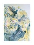 Hydrangea Particulata Giclee Print by Karen Armitage