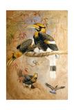 Concave-Casqued Hornbill (Dichoceros Bicornis), 1856-67 Impression giclée par Joseph Wolf