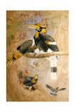 Concave-Casqued Hornbill (Dichoceros Bicornis), 1856-67 Giclee Print by Joseph Wolf