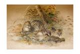Wagati Cat, 1851-69 Giclee Print by Joseph Wolf