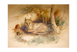 Egyptian Cat, 1851-69 Giclee Print by Joseph Wolf