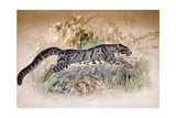 Clouded Leopard, 1851-69 Giclee Print by Joseph Wolf