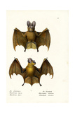 Greater False Vampire Bat, 1824 Giclee Print by Karl Joseph Brodtmann