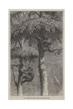 The Nest-Building Ape in His Shelter Giclee Print by Joseph Wolf