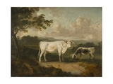 Kenwood, Lord Mansfield's Pedigree Cattle, 1797 Giclee Print by Julius Caesar Ibbetson