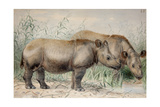 Hairy Eared Rhinoceros Giclee Print by Joseph Wolf