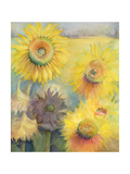 Sunflowers Giclee Print by Karen Armitage