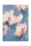 Hibiscus, Apricot Giclee Print by Karen Armitage