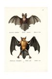 Hollow-Faced Bat, 1824 Giclee Print by Karl Joseph Brodtmann