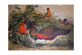 Horned Tragopan, 1861 Giclee Print by Joseph Wolf