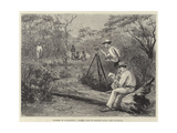 The Land of the Golden Nugget, Hampton Plains Giclee Print by Julius Mandes Price