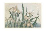 Iris Flowers and Grasshopper, C.1830-31 Giclee Print by Katsushika Hokusai