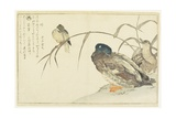 Mallards and a Kingfisher, 1790 Giclee Print by Kitagawa Utamaro