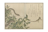 Snake and Lizard, 1788 Giclee Print by Kitagawa Utamaro