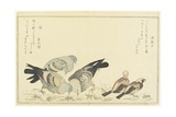 Tree Sparrow and Rock Dove, C. 1790 Giclee Print by Kitagawa Utamaro