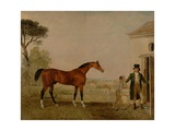Sultan' at the Marquess of Exeter's Stud, Burghley, 1826 Giclee Print by Lambert Marshall