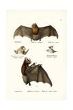 Spear-Nosed Bats, 1824 Giclee Print by Karl Joseph Brodtmann
