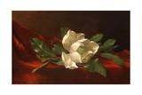 Magnolia, C.1885-95 Giclée-Druck von Martin Johnson Heade