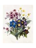 Mixed Flowers Giclee Print by Louise D'Orleans