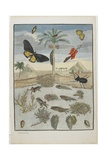 Insects and Fish with Island Background, 1705-1771 Giclee Print by Maria Sibylla Graff Merian