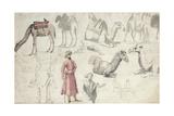 Camel Studies Giclee Print by Louis Francois Cassas