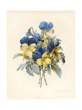 Sprig of Pansies Giclee Print by Madame Benoit