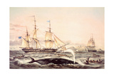 Whaling Off the Cape of Good Hope Giclee Print by Louis Lebreton