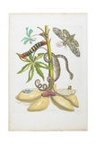 Snake, Caterpillar, Butterfly, and Insects on Plant Giclee Print by Maria Sibylla Graff Merian