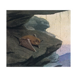 Free Tailed Bat Giclee Print by Louis Agassiz Fuertes
