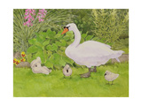 Swan and Cygnets Giclee Print by Linda Benton