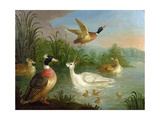 Ducks on a River Landscape Giclee Print by Marmaduke Craddock